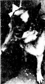 Mick the dog